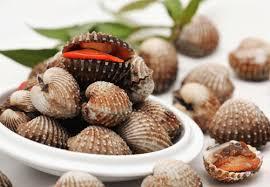 Kết quả hình ảnh cho các loại sò, ốc