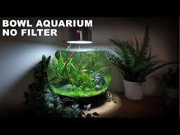 How To Make A No Filter 3 Gallon <b>Fish Bowl Aquarium</b> (No Filter No ...