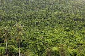 <b>Jungle</b> - Wikipedia