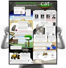 17 Things Worth Knowing About Your Cat Poster – The Oatmeal