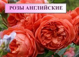 """Товары """"Садовый мир"""" советы для садоводов и огородников ..."""