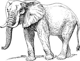 How Elephants Got Their Trunks – an Original Folktale by Colin D.