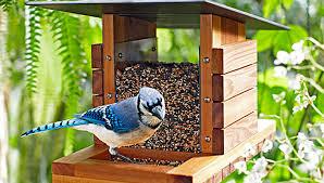 How to Build a DIY Bird Feederdiy bird feeder   blue jay