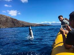 Oh My <b>Gosh</b>! - Review of <b>Ultimate</b> Whale Watch & Snorkel, Lahaina ...