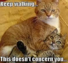 Funny memes tumblr animals   Funny Family Wallpaper via Relatably.com