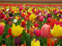 Resultado de imagen de imagenes de primavera