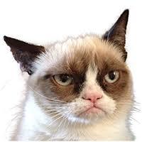 Grumpy Cat | About Grumpy Cat™ - The internet's grumpiest cat ... via Relatably.com