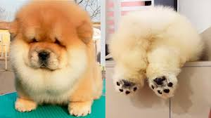 THE <b>CUTEST DOG</b> BREEDS In The World - YouTube