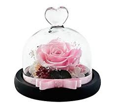 Dakotan Handmade Eternal Rose- Preserved Flower ... - Amazon.com