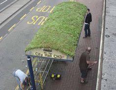 Afbeeldingsresultaat voor groen dak bus