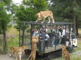 תוצאת תמונה עבור zoo
