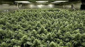 marijuana legalization paper legalizing marijuana paper features middot slant magazine slant magazine
