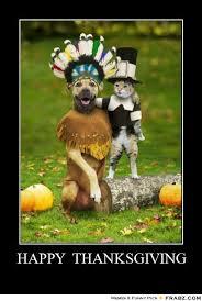 Memes Vault Thanksgiving Cat Memes via Relatably.com