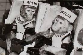 Как <b>обезьяны</b> стали <b>космонавтами</b>