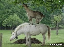 Картинки по запросу принц на белом коне фото