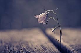 Image result for wilting flower