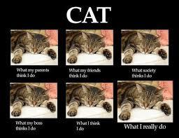 cat, what i really do meme, original source unknown, via ... via Relatably.com
