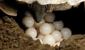 صور سلاحف متنوعه وجميله Turtles