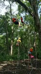Summer Day Camp is Tree <b>Climbing</b>! - <b>Big Foot</b> Recreation District