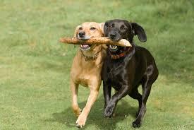 Πότε αισθάνονται αδικημένοι οι σκύλοι;