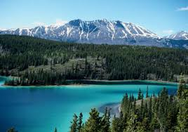 Image result for whitehorse