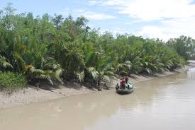 mangrove essay com essay on importance of mangrove ecosystem ecology