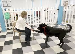 pawsitive reinforcement dog trainer finds happiness in midlife 032816tsr debra meyer dog training 03