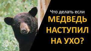 """Как случилось так, что """"медведь на ухо наступил"""" - Спутник FM"""
