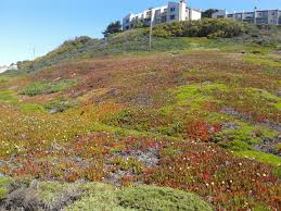 Image result for Palmetto Avenue, Pacifica, CA  picture