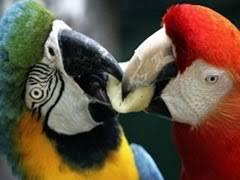 Resultado de imagen para especies exoticas en mexico