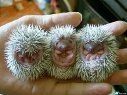 Image result for baby animal pics