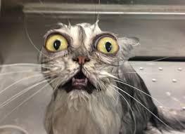 20-Funny-Shocked-Cat-Memes-16.jpg via Relatably.com
