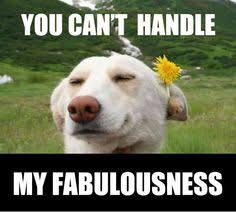 im fabulous memes ;3 on Pinterest | I'm Fabulous, Im Fabulous and ... via Relatably.com