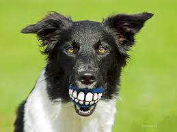 Dr. Ernie's Top 10 <b>Dog</b> Dental Questions... and His Answers!