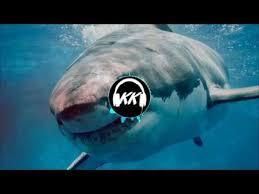 <b>Shark KYKU</b> - YouTube