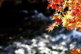 「紅葉 いい天気 写真フリー」の画像検索結果