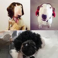 Fashion Household <b>Pet Dog Cat</b> Straight <b>Curly</b> Wig <b>Long</b> Hair ...
