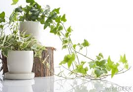 room plants x: wonderful indoor plants pots  neutral colored indoor plant pots work well in just