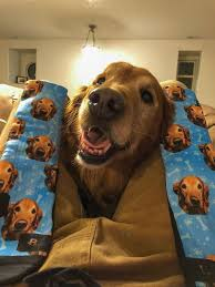 Customized <b>Dog</b> Socks Put Your <b>Cute Dog</b> on Custom Socks <b>Dog</b>