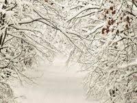 80 <b>Photography Theme</b>: Winter Wonderland ideas | winter ...