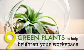 start slideshow best office plant no sunlight
