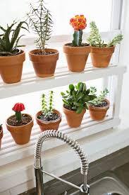 ideas window plants pinterest plant