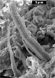 bold claims of alien life microbes in meteorites