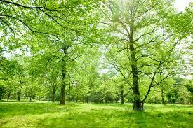 「林」の画像検索結果