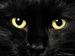 fascinating arab superstitions blackcat