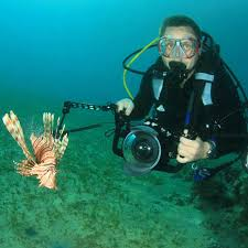 Image result for Underwater photography images
