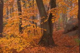 Image result for golden fall