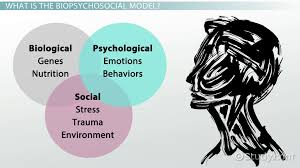 What is the Biopsychosocial Model    Definition  amp  Example   Video     Study com What is the Biopsychosocial Model    Definition  amp  Example   Video  amp  Lesson Transcript   Study com