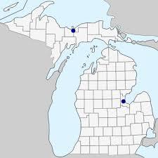 Rumex acetosa - Michigan Flora