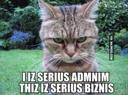 funny-cat-serious-business-meme – Bajiroo.com via Relatably.com
